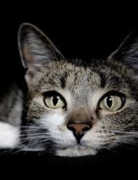 Symptoms Of Illness In Cats Ill Cat