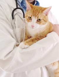 Cattery Catteries Cat Death Illness Vet